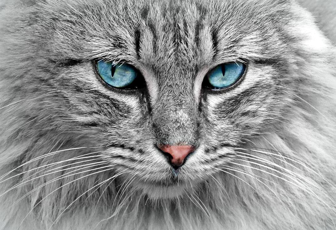 une-chat-10