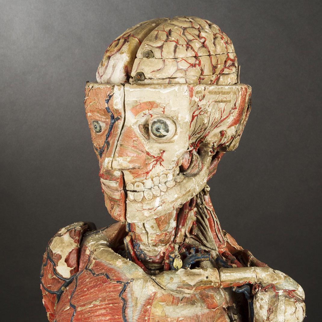 11-modele-anatomique-papier-mache