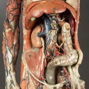 12-modele-anatomique-papier-mache