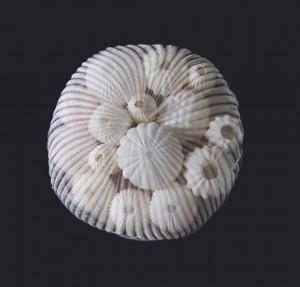 13-bijoux-mer