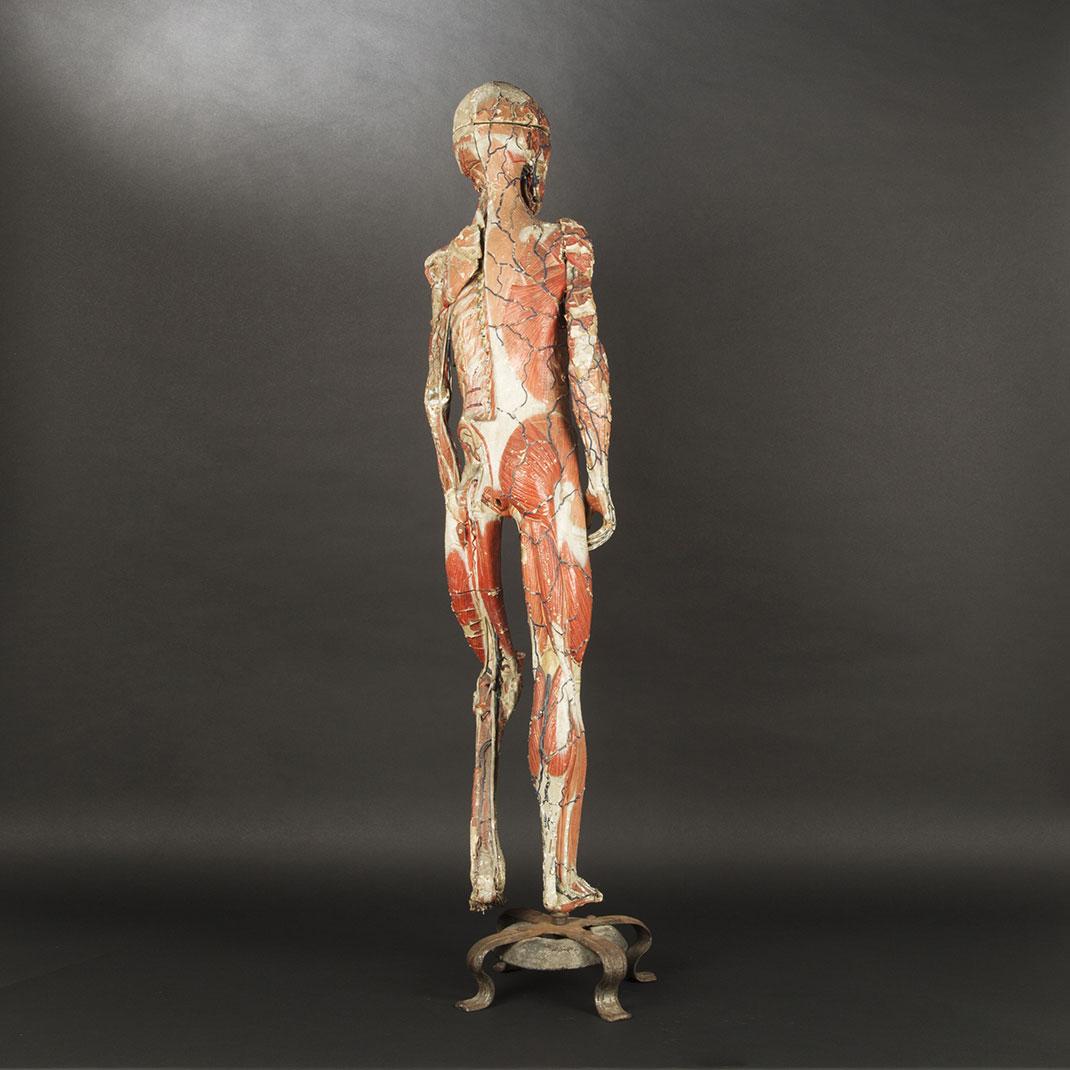 13-modele-anatomique-papier-mache