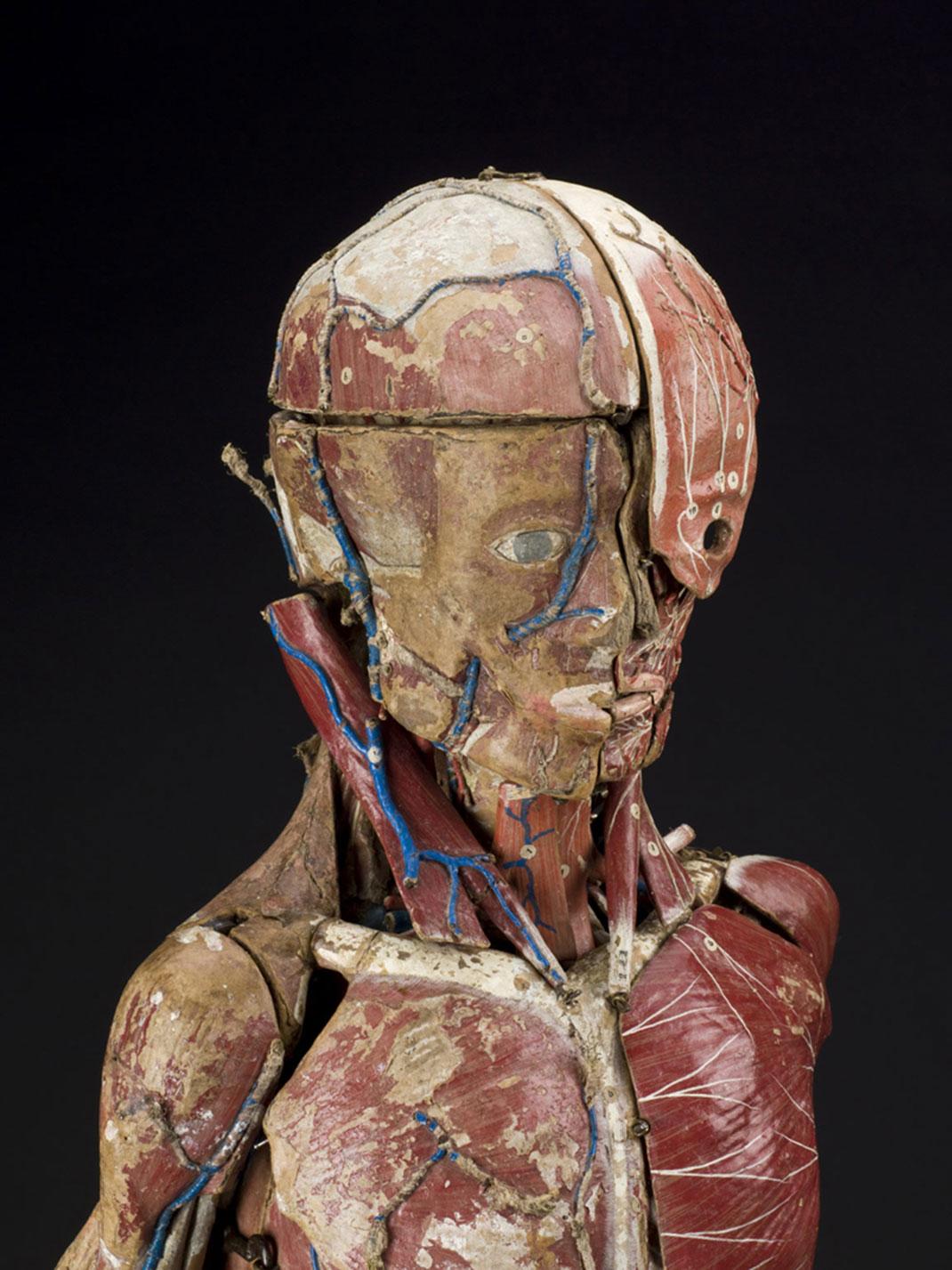 14-modele-anatomique-papier-mache