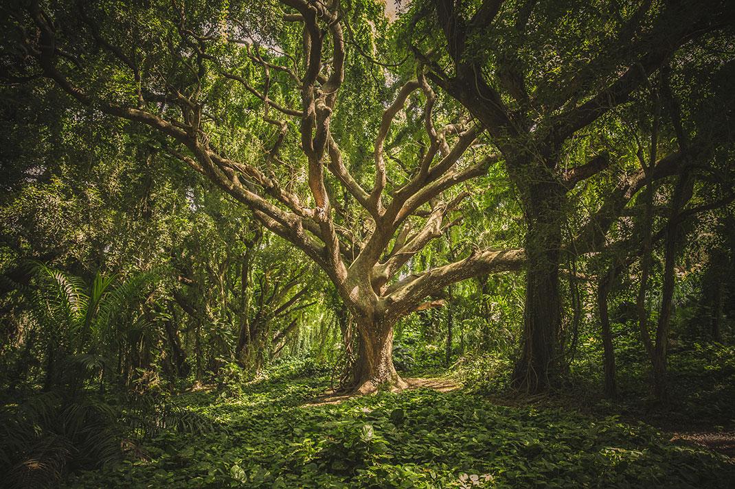 Connu Une découverte sans précédent : les arbres partagent leur  UX75