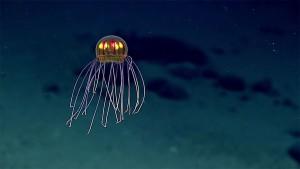 2-meduse-decouverte