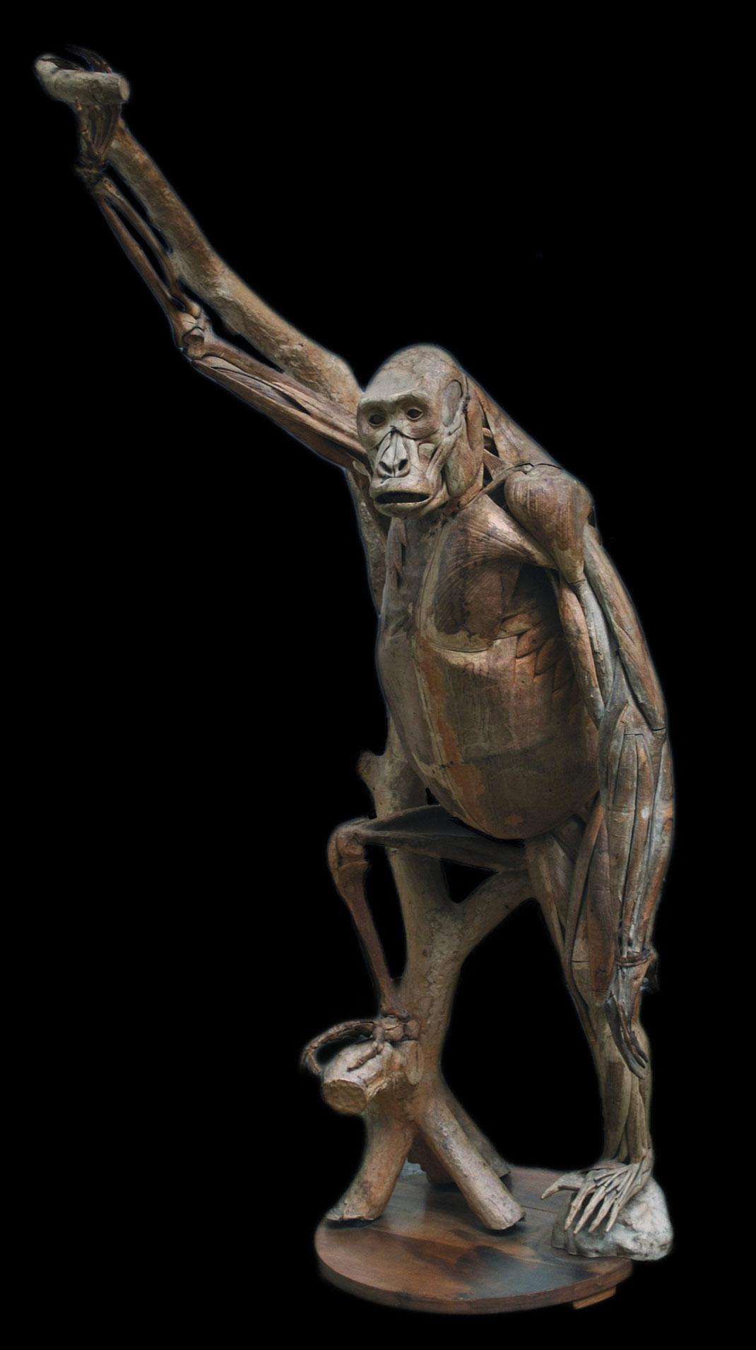 21-modele-anatomique-papier-mache
