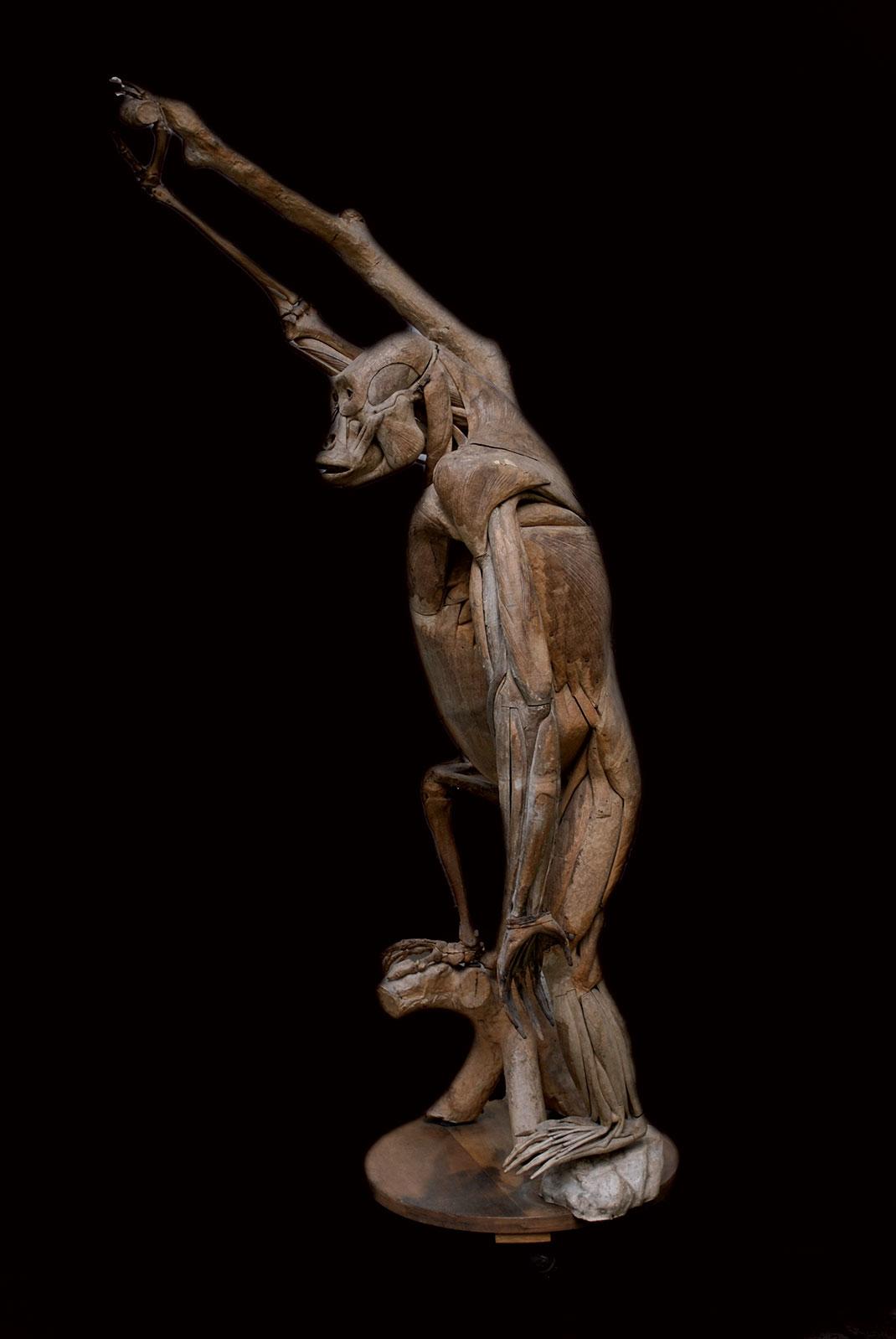 22-modele-anatomique-papier-mache