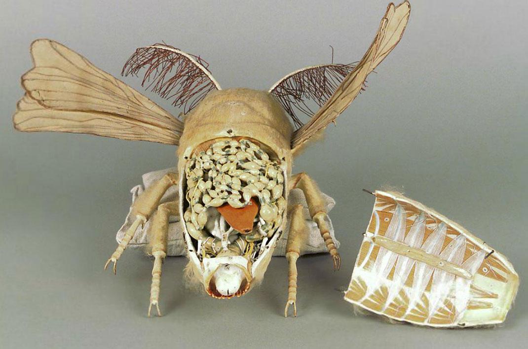 24-modele-anatomique-papier-mache