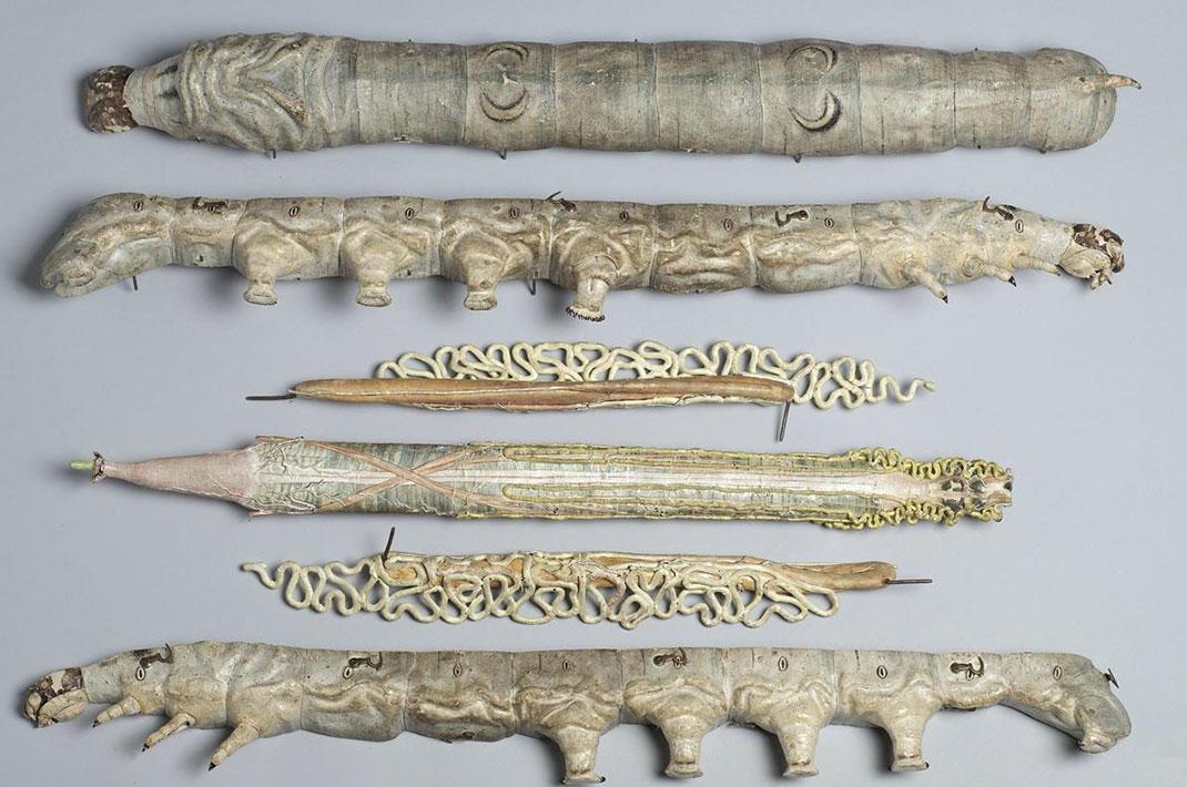 28-modele-anatomique-papier-mache