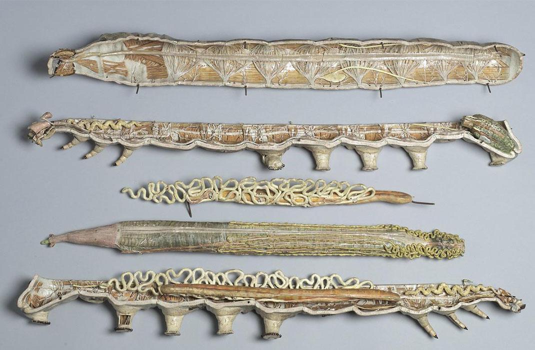 29-modele-anatomique-papier-mache