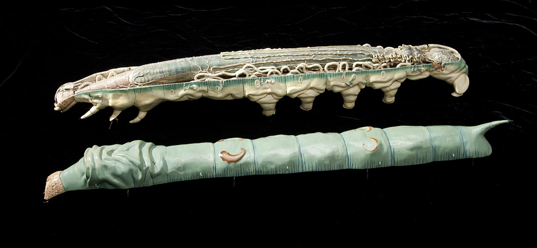3-modele-anatomique-papier-mache