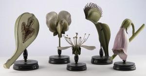 31-modele-anatomique-papier-mache