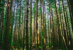 4-foret-arbres