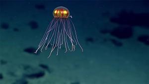 4-meduse-decouverte