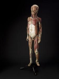 7-modele-anatomique-papier-mache