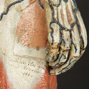 8-modele-anatomique-papier-mache