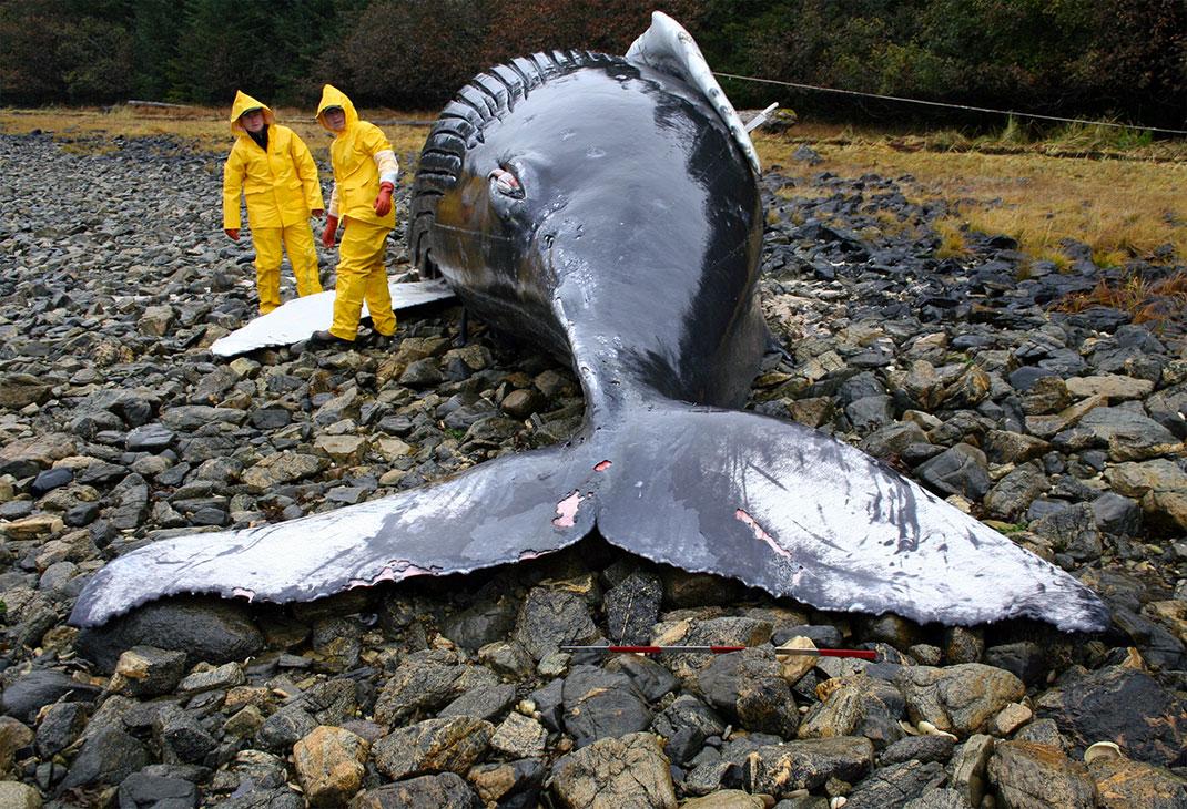 Une baleine échouée