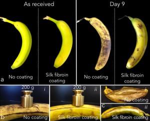 La décomposition et la résistance des bananes avec et sans dépôt du matériau en soit