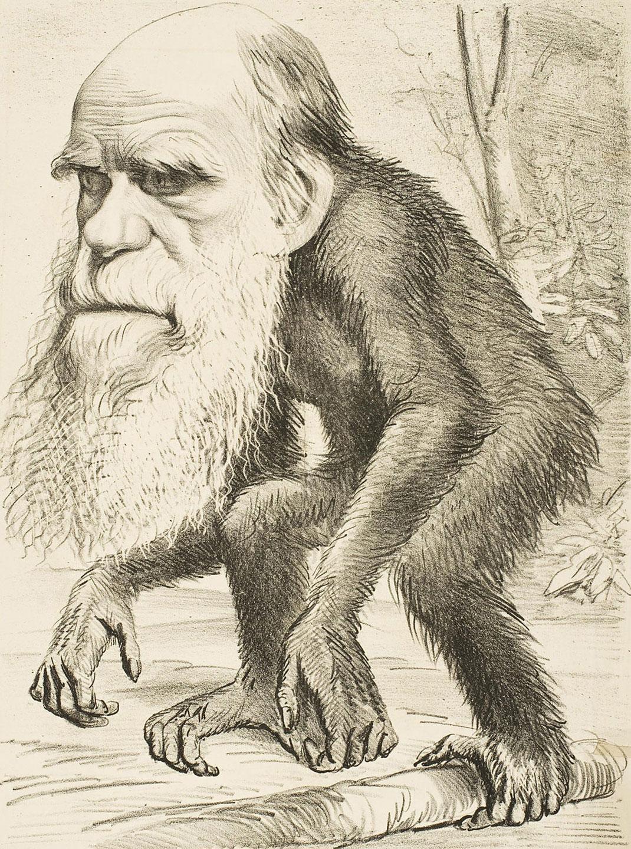 Caricature_Charles_Darwin_singe_(1871)-1