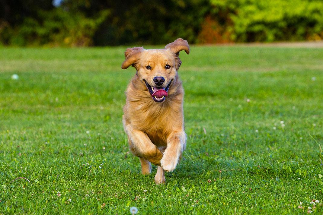 Un chien via Shutterstock