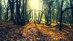 Forêt-3