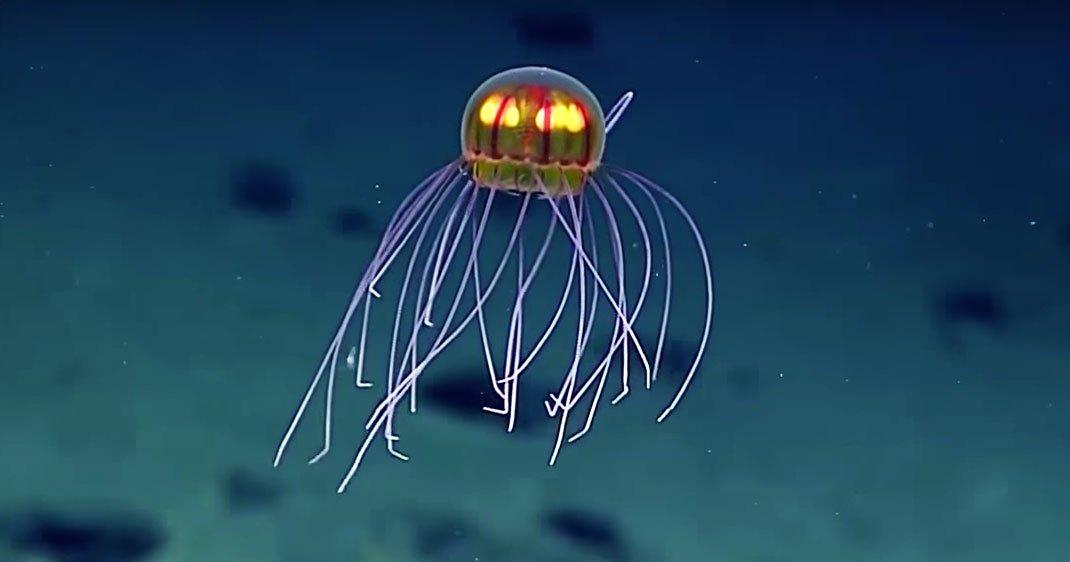 Meduse-decouverte-une-2