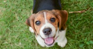 Un petit chien via Shutterstock