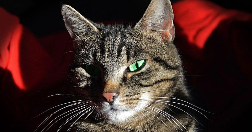 Une-parasite-chat