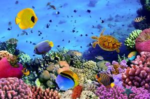 Des poissons dans l'océan via Shutterstock