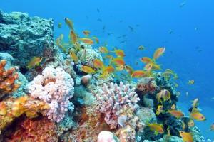 Vie-océanique-shutterstock