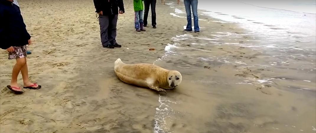 Le phoque You sur une plage avec des passants
