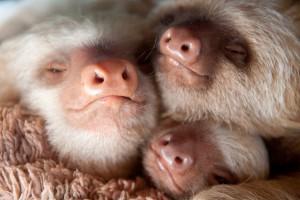 bebes-paresseux-refuge-10