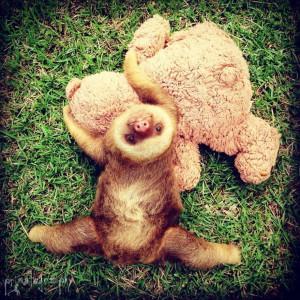 bebes-paresseux-refuge-11