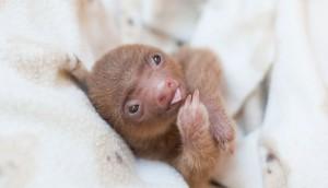 bebes-paresseux-refuge-13
