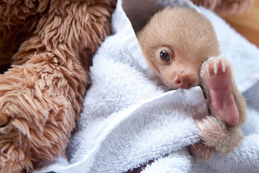 bebes-paresseux-refuge-5