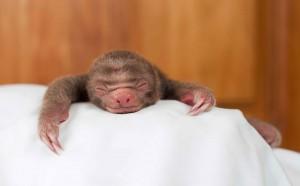 bebes-paresseux-refuge-9