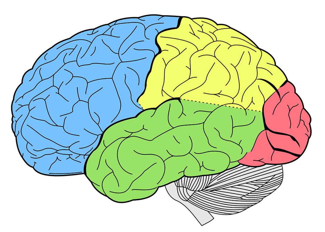 cerveau-zones-amour-18