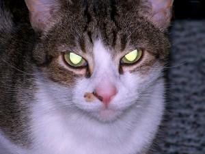 chat-méchant-2