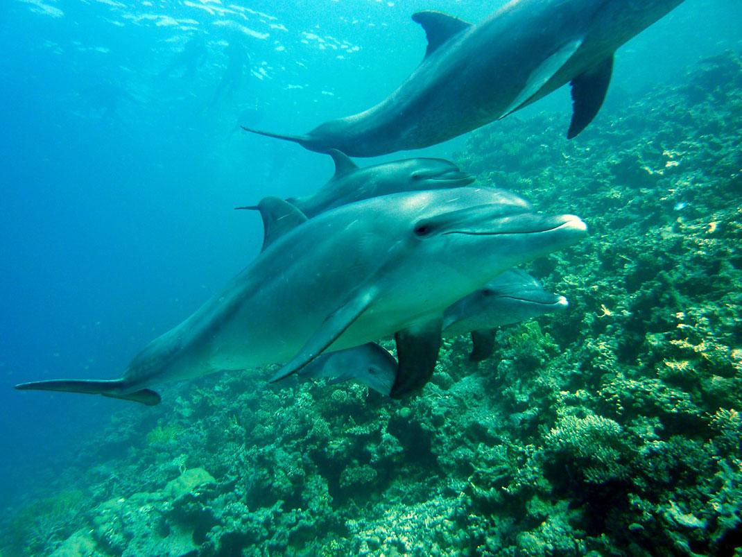 dauphin-nagent-mer-7