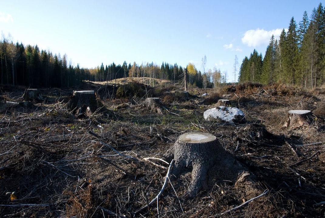 deforestation-megot