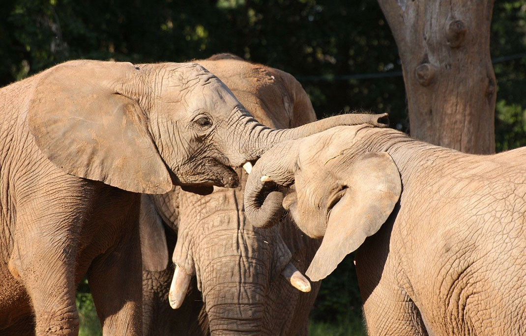 entraide-elephant-19