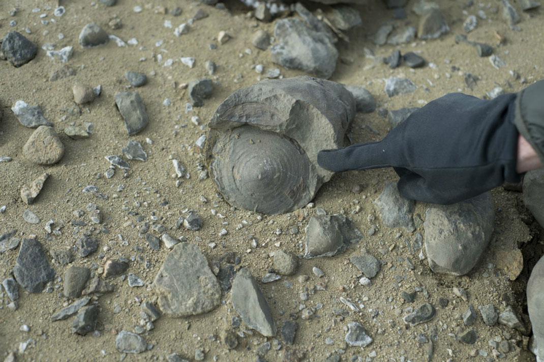 fossiles-dinosaures-antarctique-5