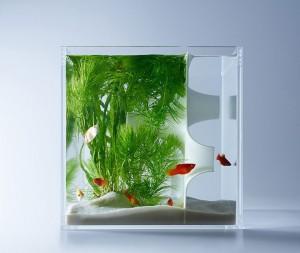 haruka-misawa-aquarium-2