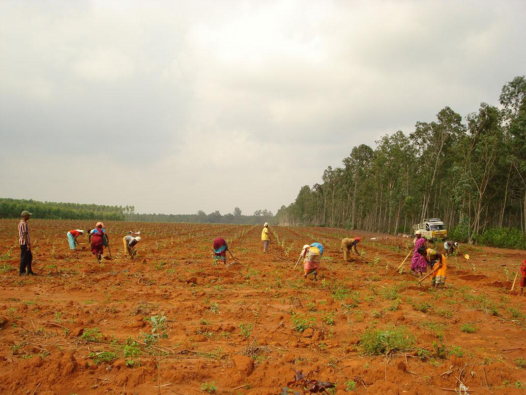 inde-reforestation