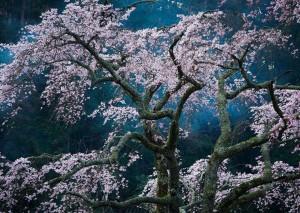 Fascination de Katsuyoshi Nakahara, Japon