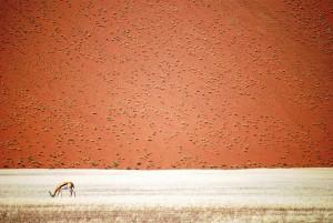 Désert namibien de Doris Landertinger, Namibie