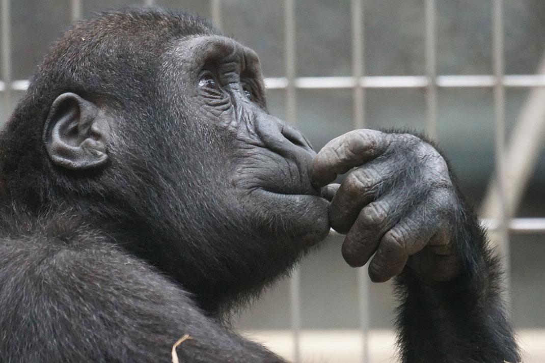 primate-evolution-amour-21