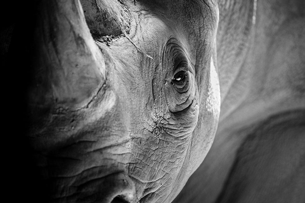 rhinoceros-portrait