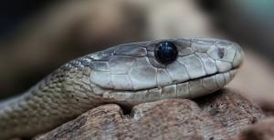 serpent-méchant-3