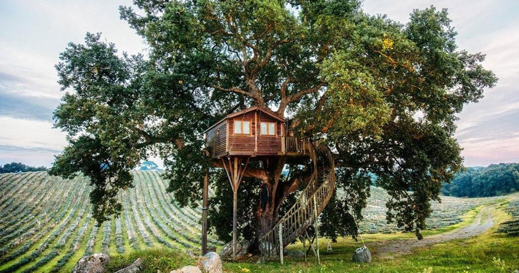 Cette cabane nich e dans un arbre vous fera passer une - Construire une maison dans un arbre ...