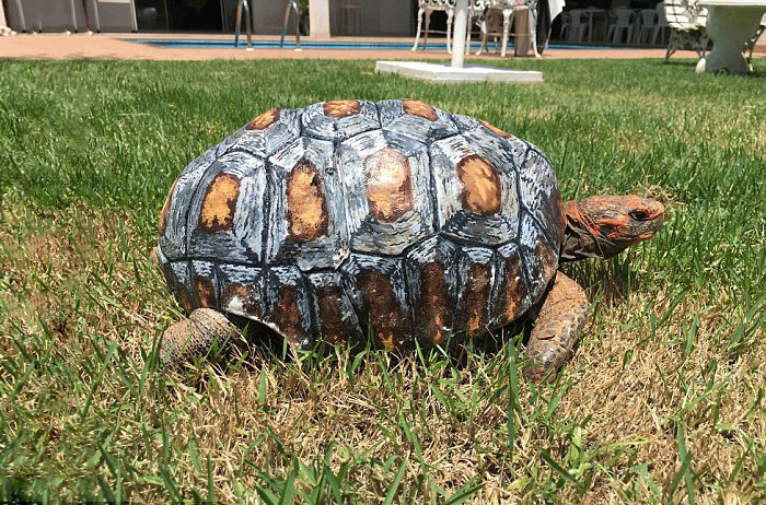 tortue-carapace-3D-7